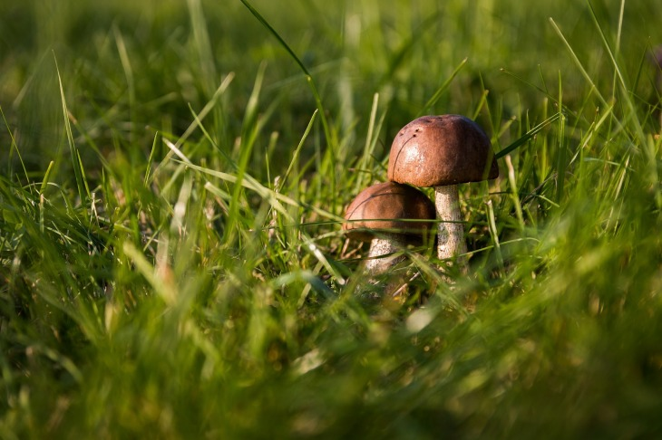 mushrooms-454172_1920