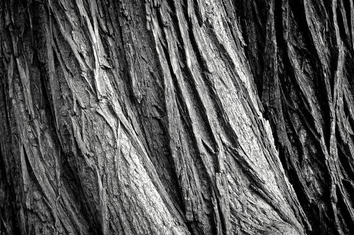 tree-2106115_1920