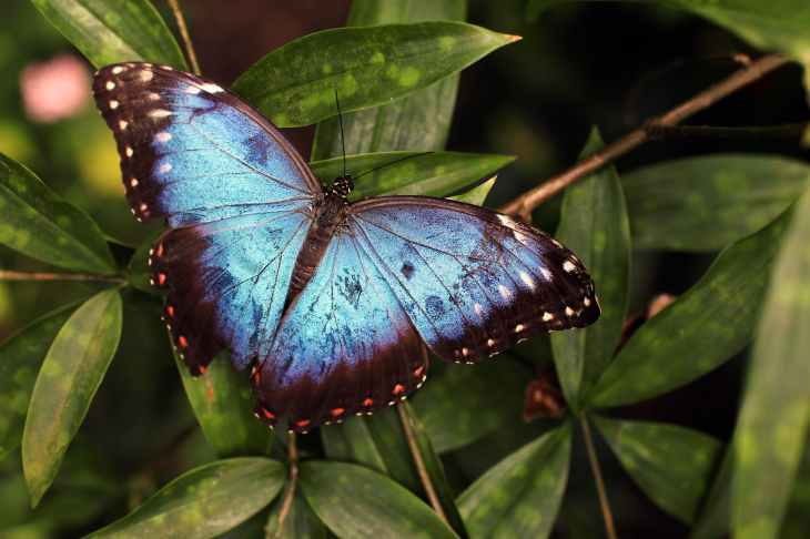 blue and black butterfly on green leaves
